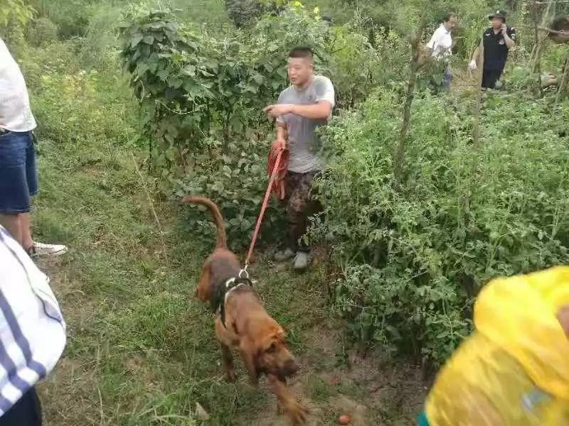 鄂州警犬找到烈日下一名濒临死亡的老人,立下奇功!