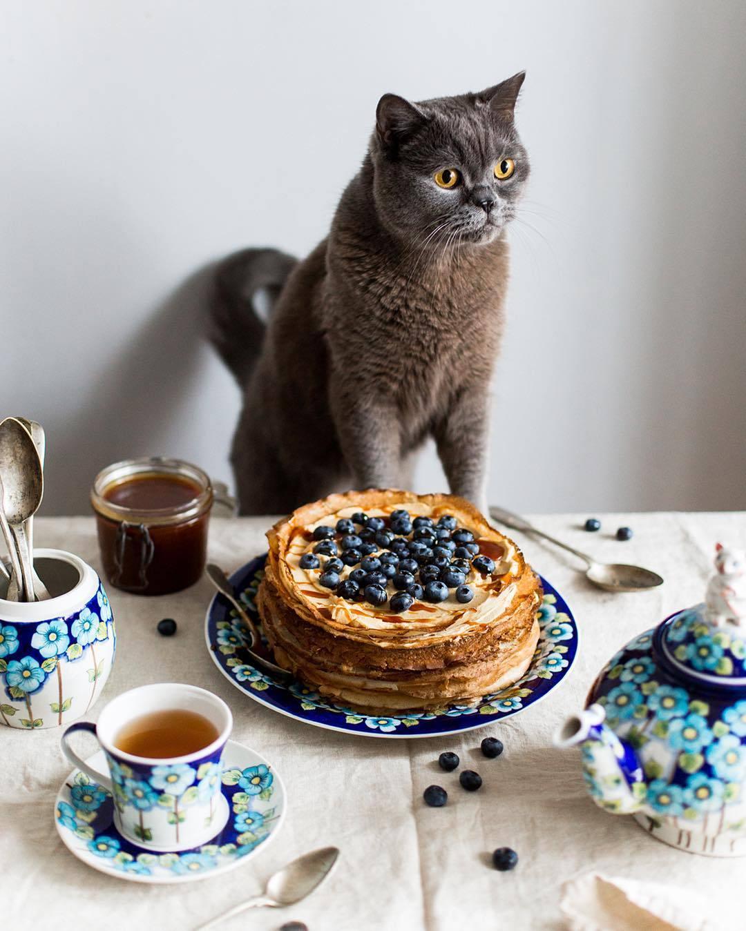 宠物-这位漂亮的美女蛋糕师,让猫咪来为蛋糕代言,将平淡无奇的蛋糕化腐朽为神奇(18)