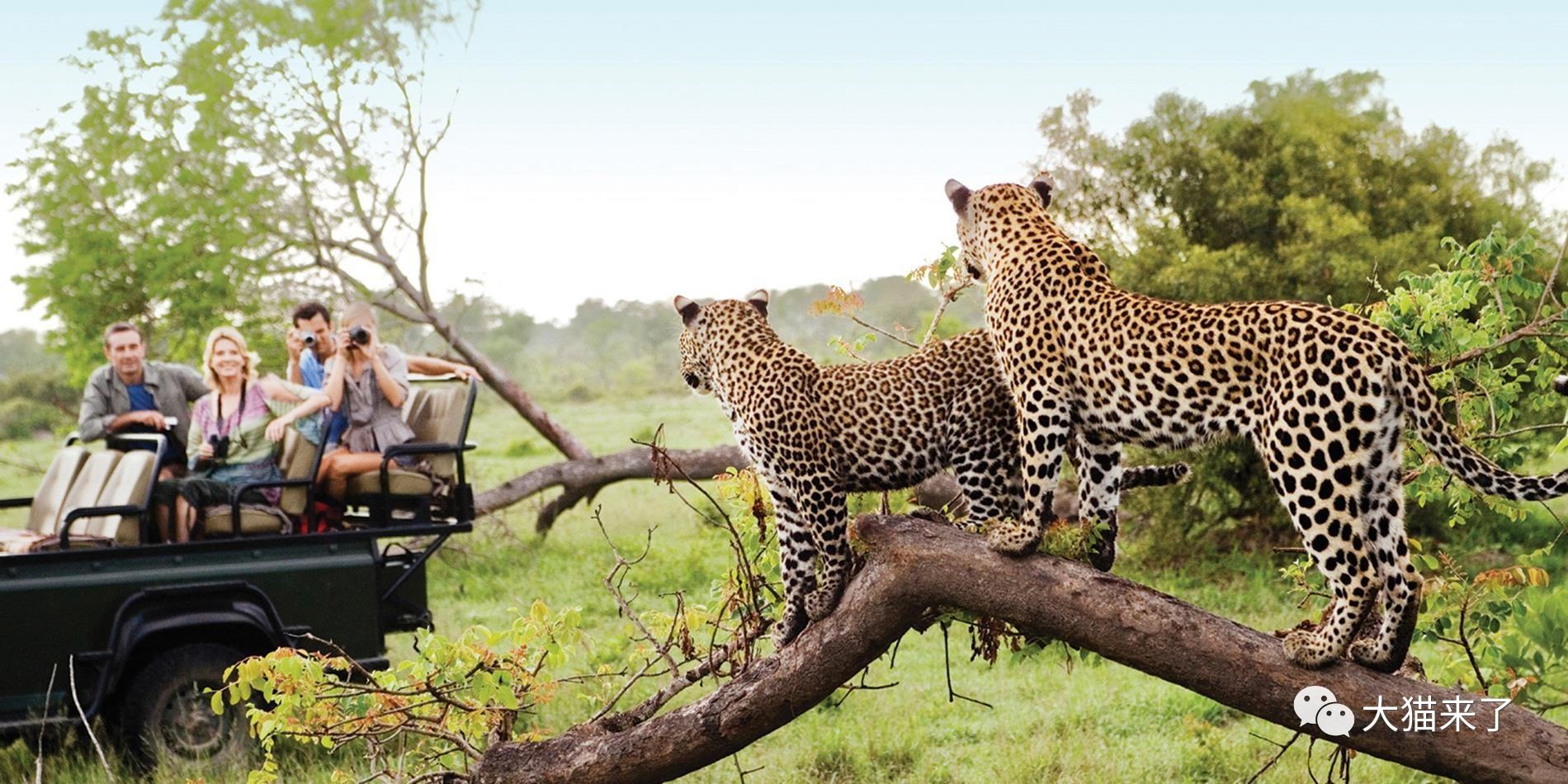 """宠物-免费yoqq边旅游边拍照就能保护狮子老虎?科学家已经开始""""拉拢""""游客了yoqq资源(5)"""