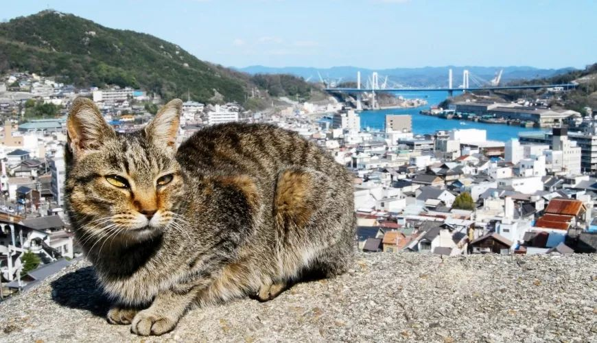 日本不只有猫岛!七个必访的动物景点带你体验被萌物包围的幸福感!