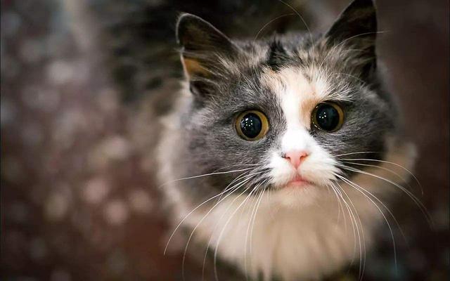 心理测试: 哪一双猫眼最清纯可爱?测试你身上有什么优点!