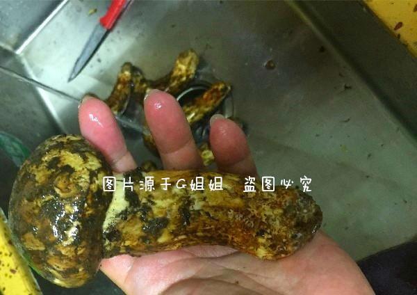 七八月在我国西藏疯长是菌类,在日本售卖的价格竟高达上千元