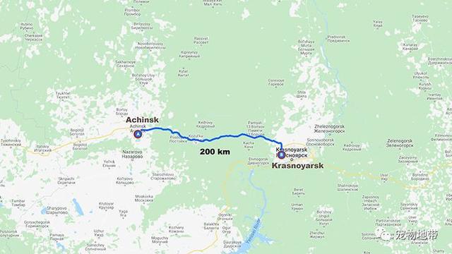 宠物-免费yoqq主人不想要了 狗狗徒步200公里穿越险地回乡寻找家人yoqq资源(4)