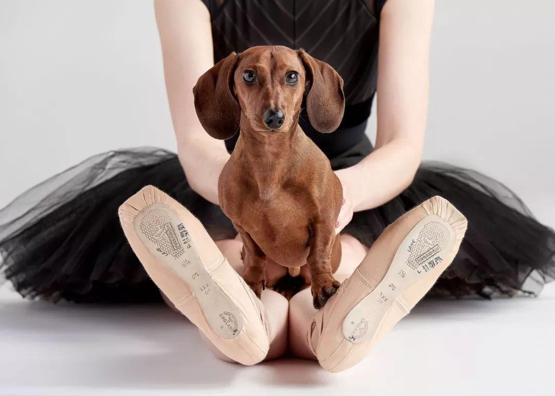 宠物-与狗狗共舞的芭蕾舞者(3)