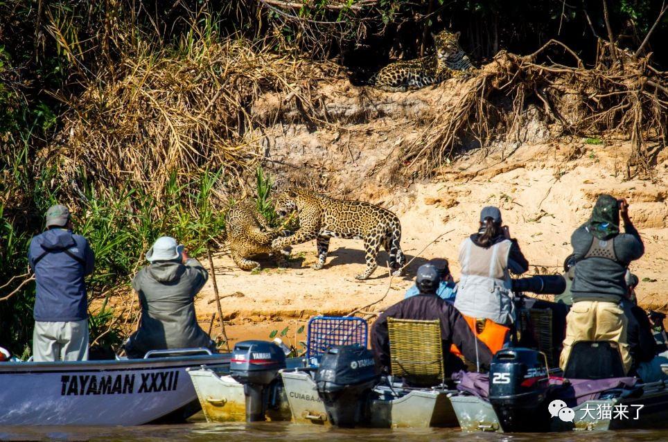 """宠物-免费yoqq边旅游边拍照就能保护狮子老虎?科学家已经开始""""拉拢""""游客了yoqq资源(9)"""