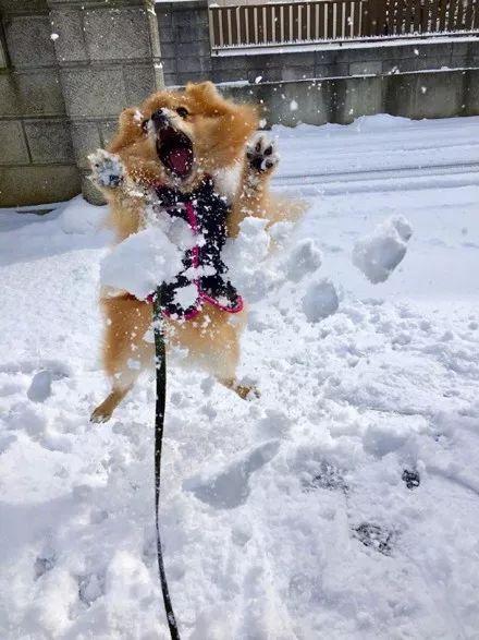 宠物-主人见别人家博美玩雪照很美,于是也带着自家博美玩雪拍照,结果.....(5)