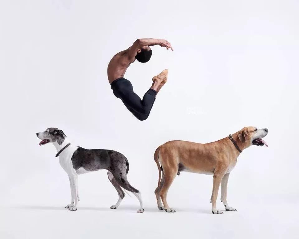 宠物-与狗狗共舞的芭蕾舞者(9)