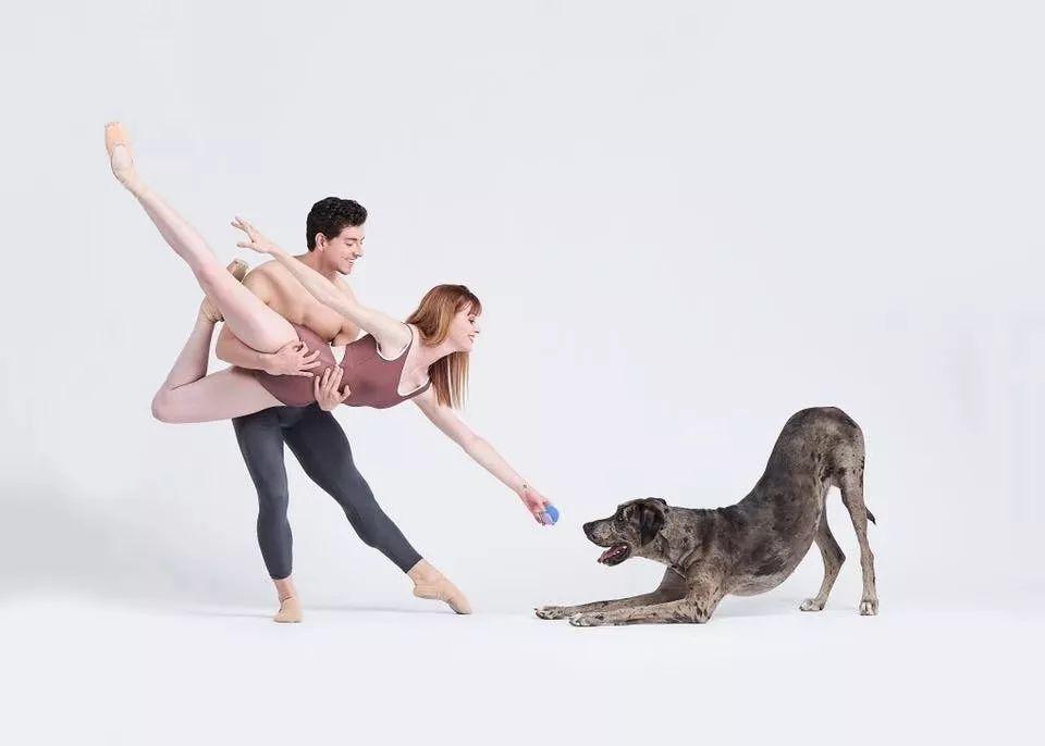 宠物-与狗狗共舞的芭蕾舞者(19)