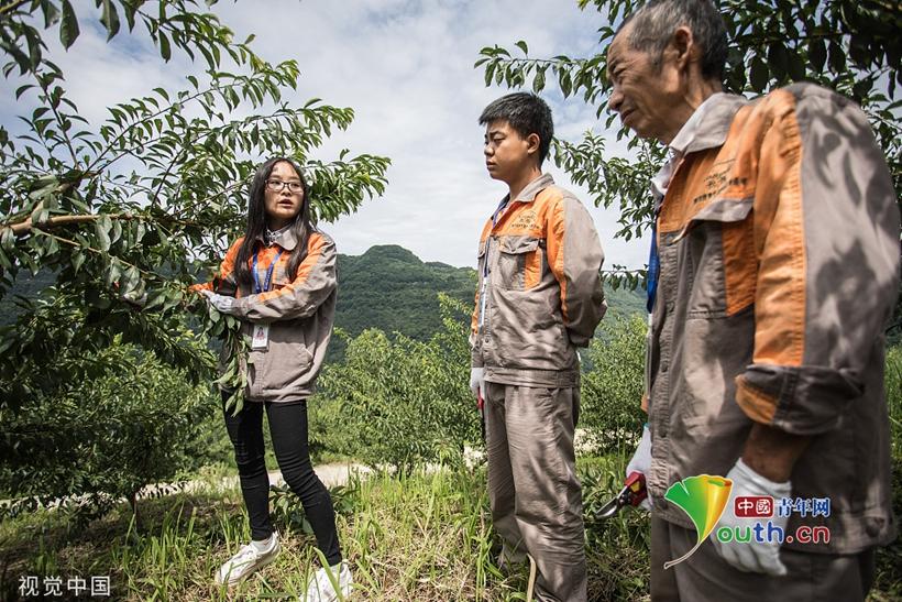 95后美女扎进深山当农民 管理6000亩果树