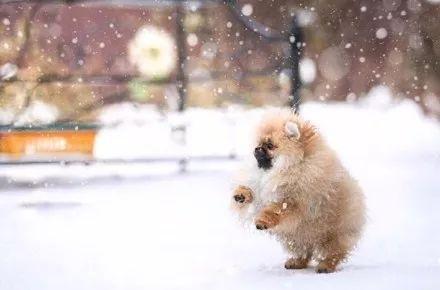宠物-主人见别人家博美玩雪照很美,于是也带着自家博美玩雪拍照,结果.....(3)