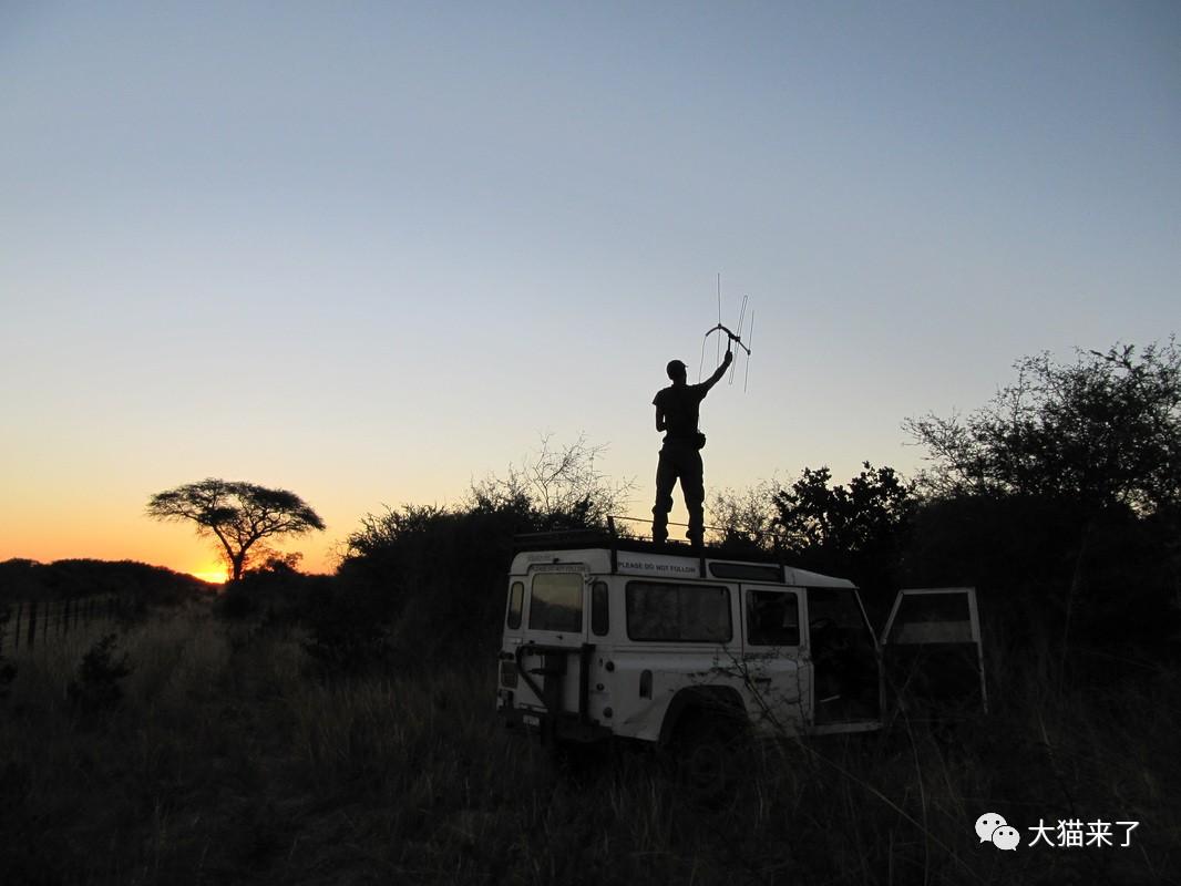 """宠物-免费yoqq边旅游边拍照就能保护狮子老虎?科学家已经开始""""拉拢""""游客了yoqq资源(2)"""