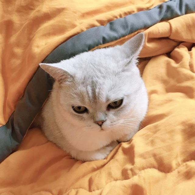 猫咪怎么这么爱干净,每天洗脸、舔毛、埋便便不厌其烦
