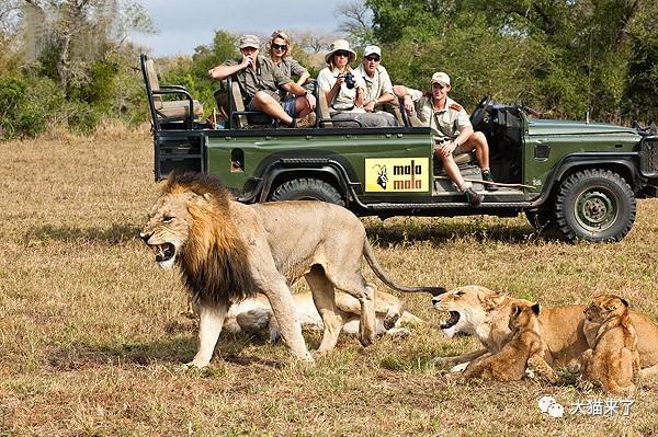 """宠物-免费yoqq边旅游边拍照就能保护狮子老虎?科学家已经开始""""拉拢""""游客了yoqq资源(3)"""
