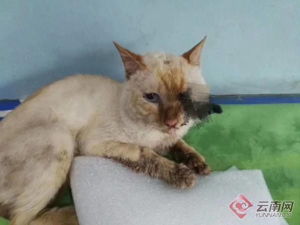 什么仇什么怨?昆明一只小猫被人用箭从眼部射进头颅