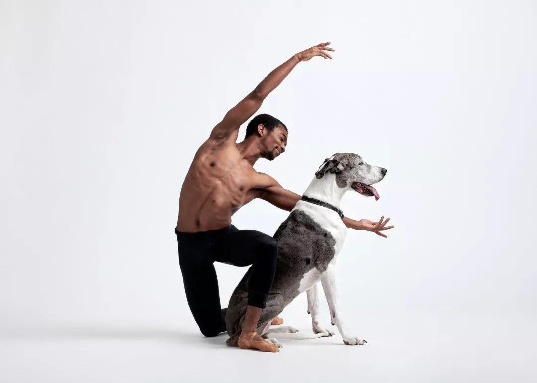 宠物-与狗狗共舞的芭蕾舞者(12)