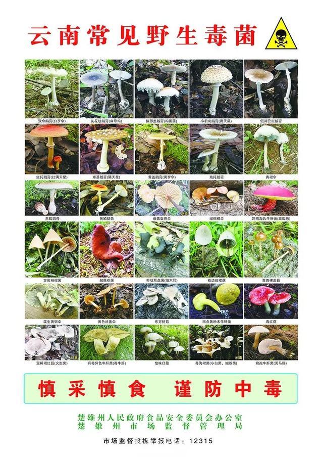楚雄州发布预防食用野生菌中毒公告(附云南常见野生毒菌)