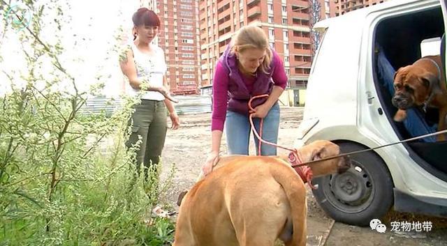 宠物-免费yoqq主人不想要了 狗狗徒步200公里穿越险地回乡寻找家人yoqq资源(7)