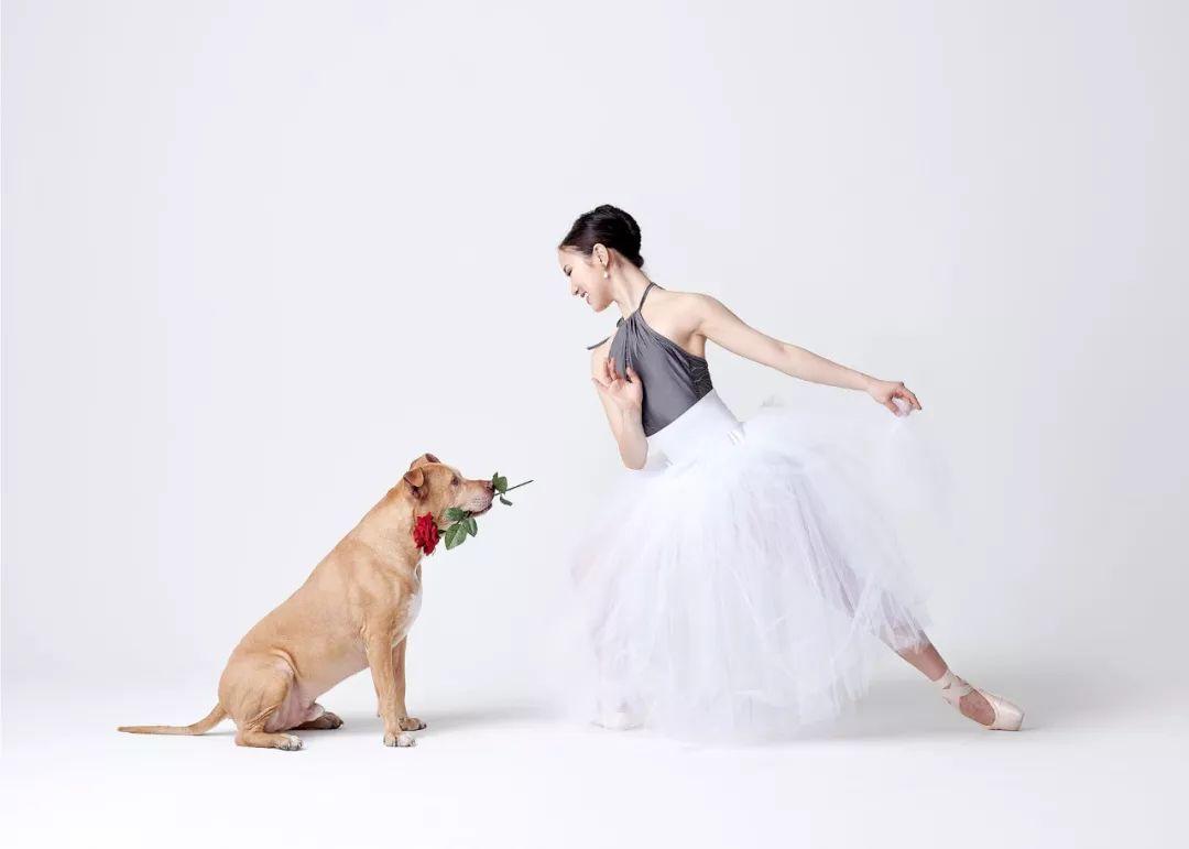 宠物-与狗狗共舞的芭蕾舞者(1)