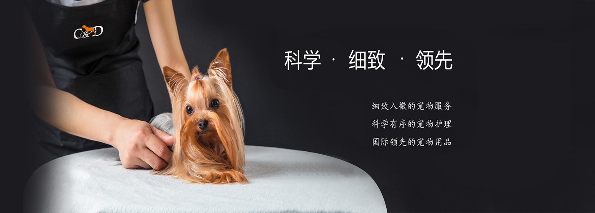 彼丕宠物学校---宠物美容师的由来