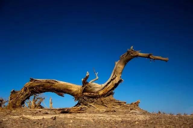 男子上山捡柴烧火,捡了一块枯木带回家竟变成冰种翡翠?