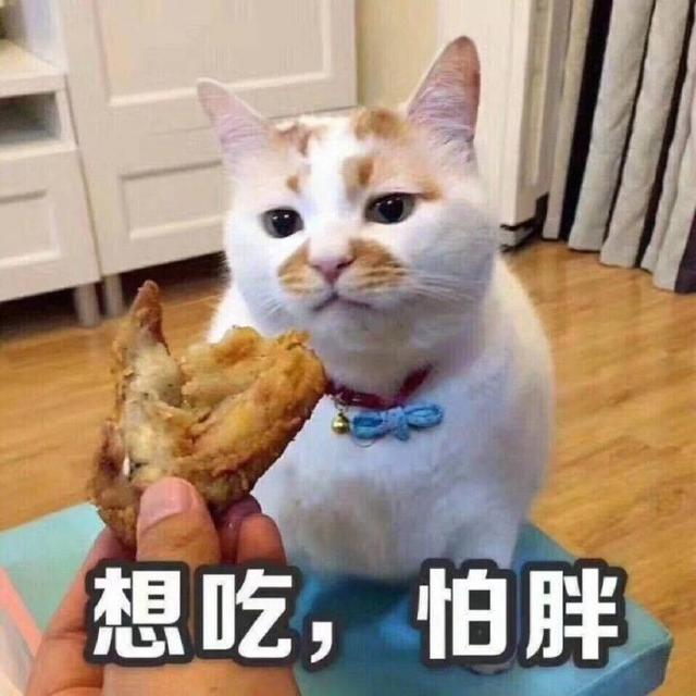 猫咪表情包合集|我这不是肉,是妈妈的钱