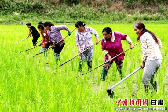 徽县促传统优势产业品牌化、产业化发展