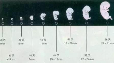 懷孕超過這個時間,杜絕做人流!危險性極高..._胎兒