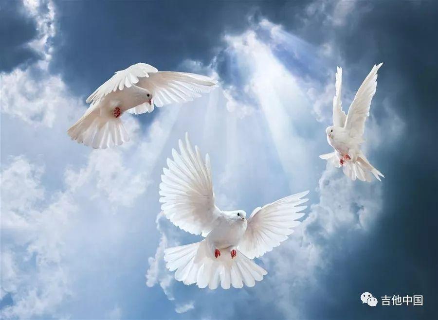 读《三只鸽子》的故事,走进卡弗兰特 750C的内心世界