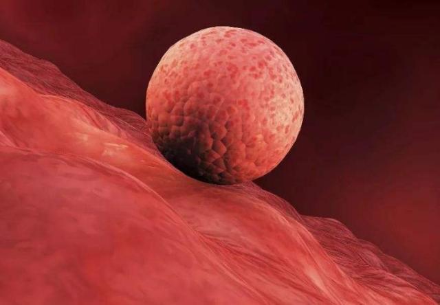 <b>备孕时,别等停经了,受精卵成功着床后,身体会先发出这3个信号</b>