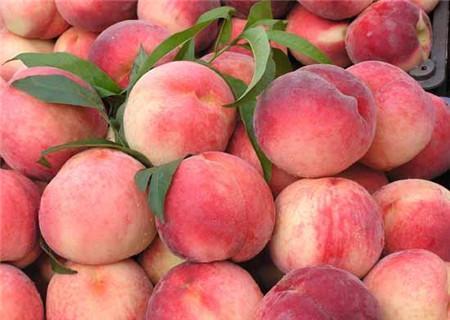 夏季养生多吃10种水果,不仅能益气补血,还解暑利尿,营养丰富