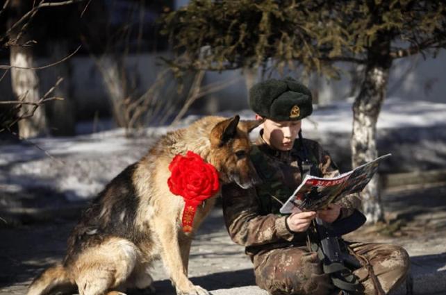 各国是怎么处理退役军犬的?我军做法高明,英军最残忍
