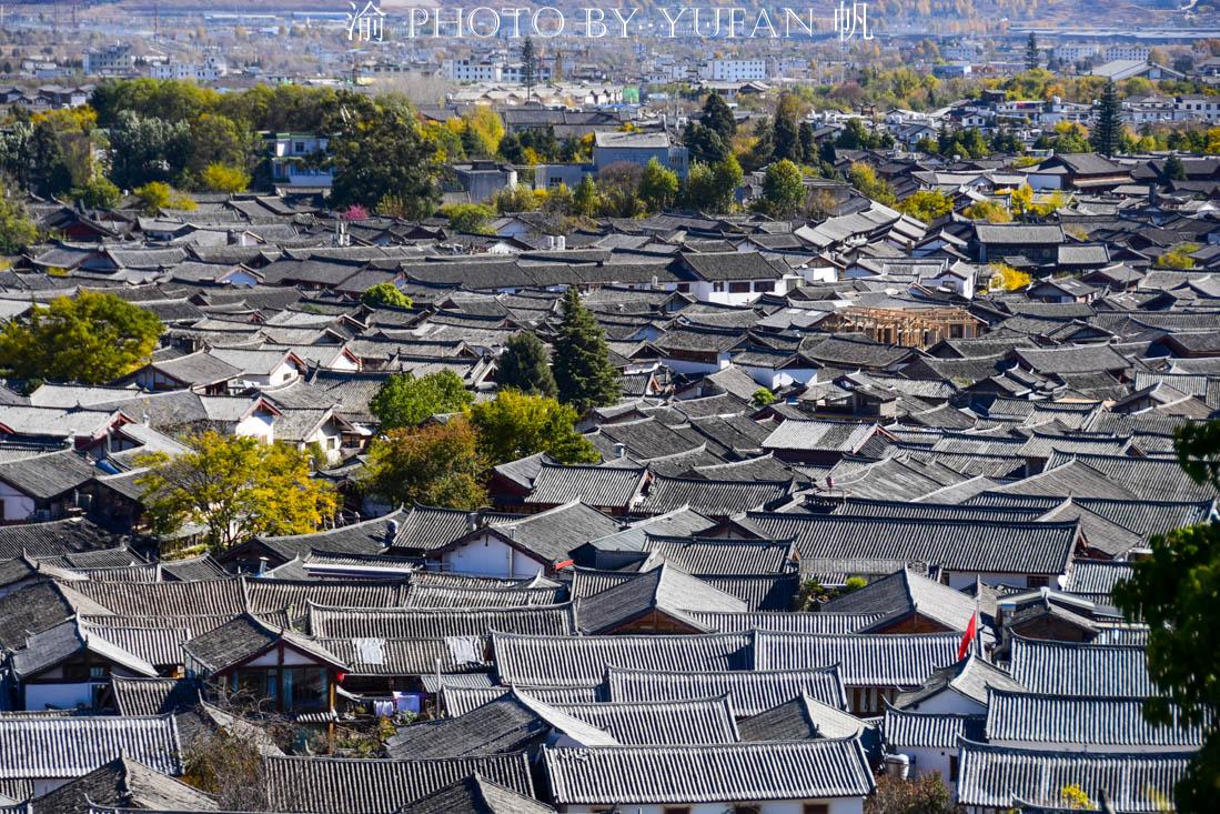 中国最便宜的蔬菜,丽江村民卖1元一把,广东人说卖10元都不贵