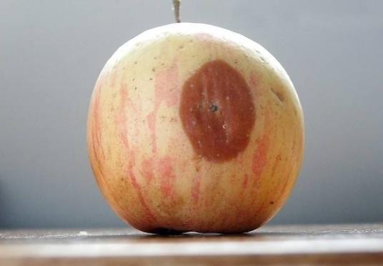 心理测试:三种苹果,你最先吃哪一种?测你的乐观程度,准