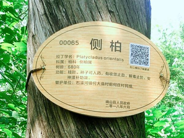驻马店古树保护协会筹备会古树调研活动圆满成功