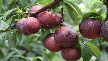 既可以满足食欲,还能燃脂排毒,帮助甩掉肚腩,这几种水果必须吃