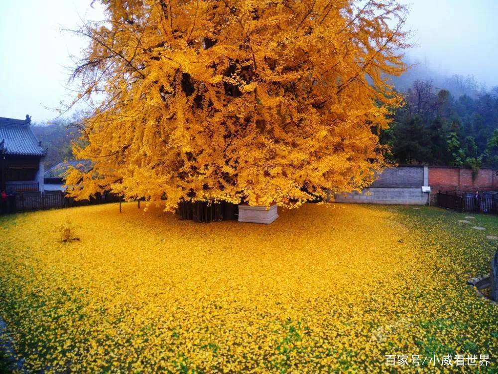<b>世界最漂亮的六棵树,日本这棵非常梦幻,中国的这棵有种穿越感!</b>