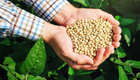 【界面早报】近期中国企业采购美国农产品取得进展 暴风集团实控人冯鑫被采取强制措施