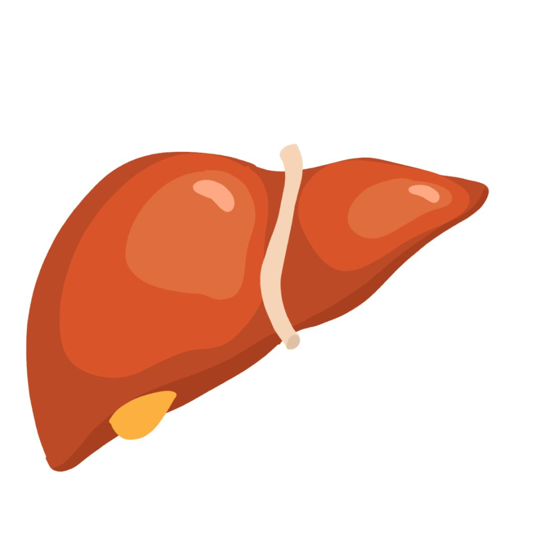 轻度脂肪肝注意事项_脂肪肝并不是胖人的专利!瘦子照样可能得!_肝脏