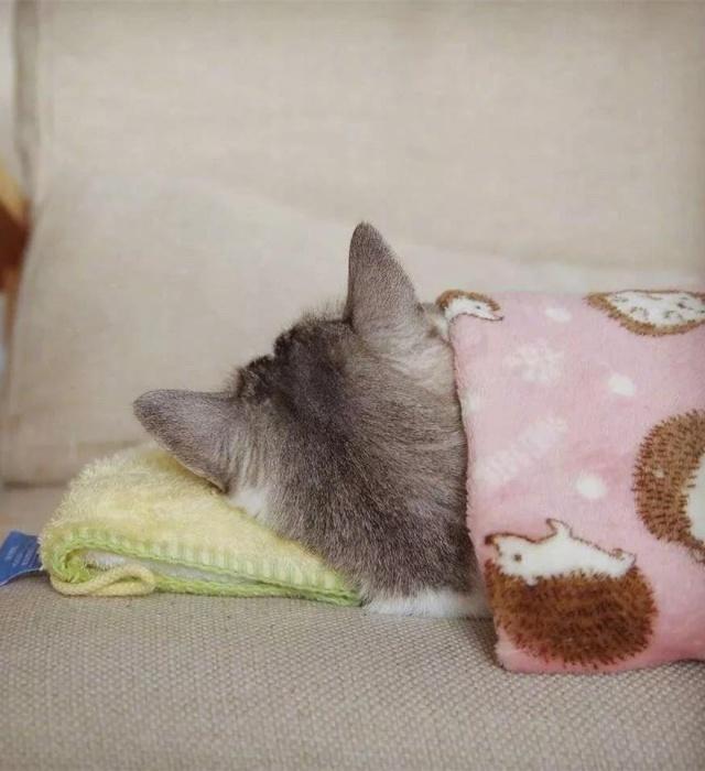 看到丝袜就想撸_连睡觉都那么可爱,这后脑勺想撸!