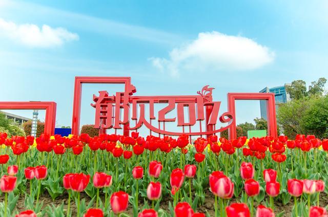 """江苏最""""土豪""""的花海,造价5000万,却免费开放,离南京半小时"""