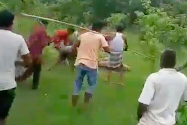 一成年雄性老虎袭击村民致10人受伤 被村民乱棍打死