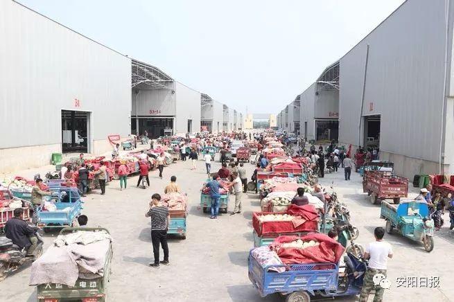 百城建设提质工程县区行丨内黄果蔬城:小农户连接大市场