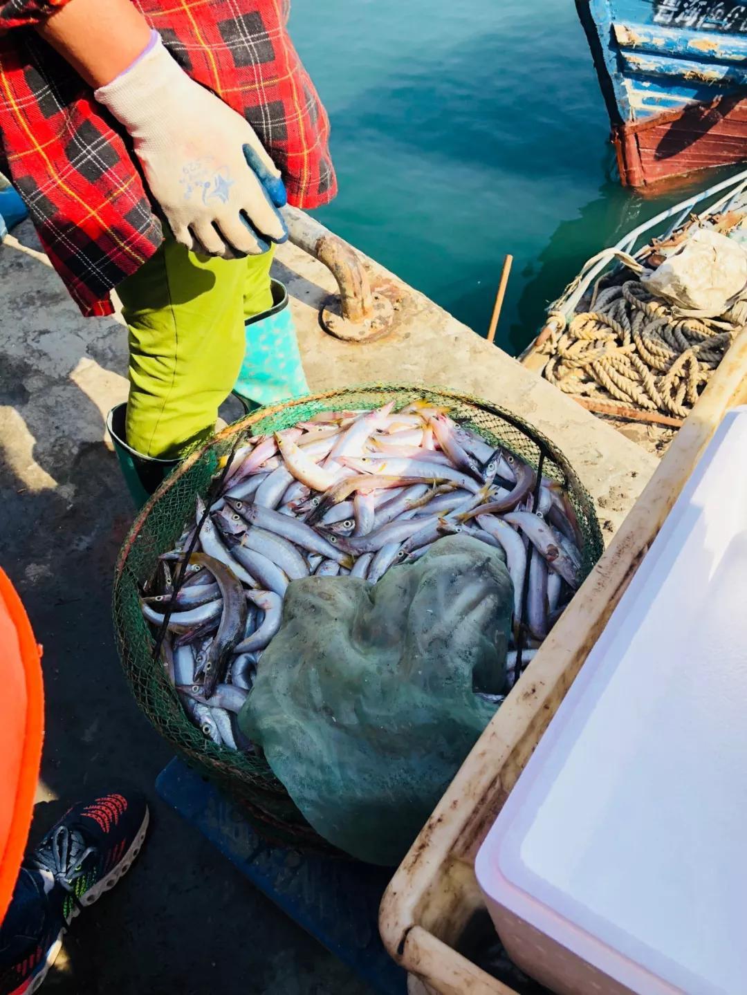 鱼的这个部位千万不能吃,会中毒!
