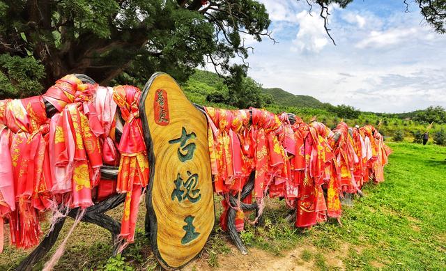 甘肃平凉崇信县有颗华夏古槐王,树龄3200多年,全国树龄之最
