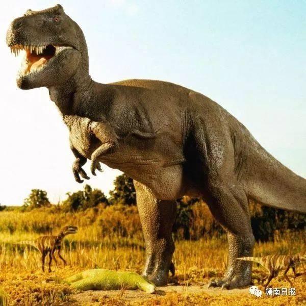 暴龙又名霸王龙,是一种超大型的肉食性恐龙,属于兽脚类.
