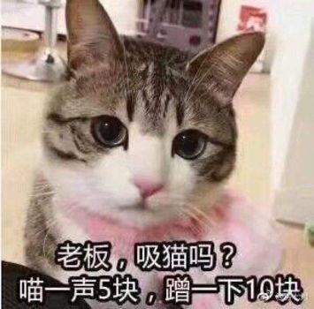 养猫的人为何如此优秀?
