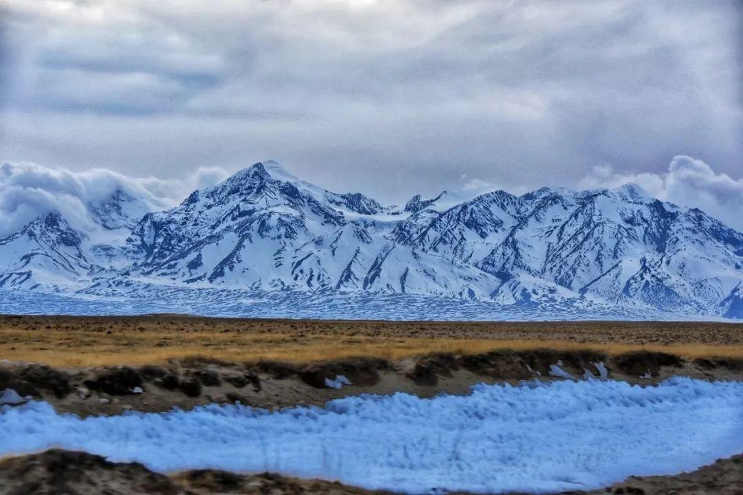 羌塘自然保护区藏羚羊种群数量已增至20万只以上
