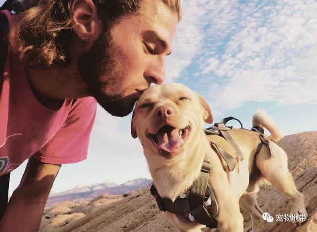 男子与狗狗的戏剧性相遇 展开了一段不一样的冒险之旅