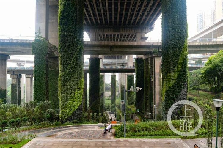 让堡坎护坡轨道立柱都美起来 重庆拟立法鼓励立体绿化