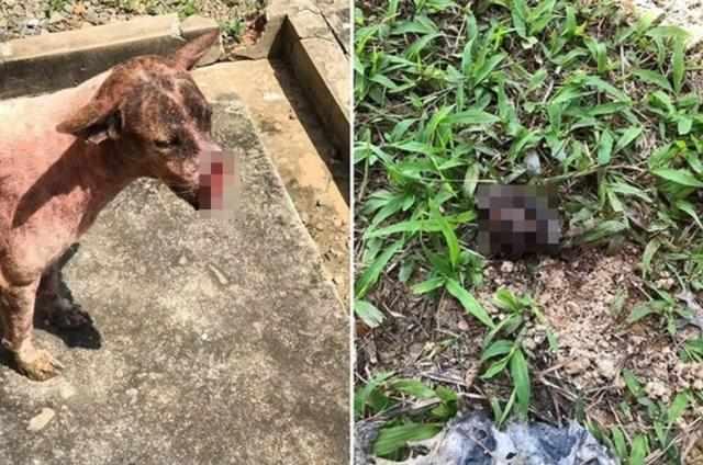 马来西亚狗狗到醉男家讨食惨被一刀斩首 砍歪了 嘴巴掉在草皮上